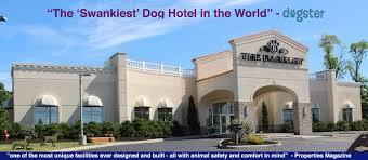 dog boarding u0026 cat boarding resort dog kennel u0026 cat hotel cleveland