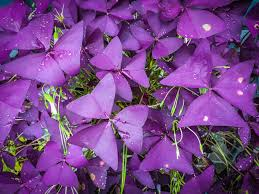 7 great container plants for shady spots