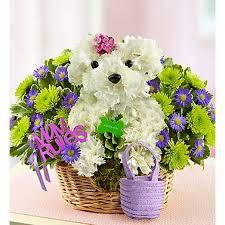 dog flower arrangement paws 1800 flowers flower essence easton florist serving