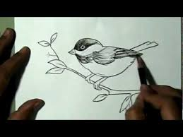 how to draw a beautiful sparrow sitting on branch yzarts youtube
