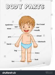 vocabulary worksheet parts body stock illustration 105995822