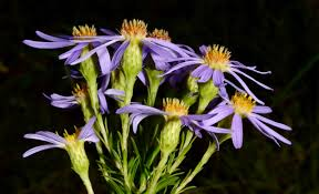 native indiana plants get your botany on