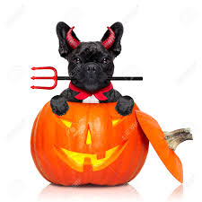 puppy background for computer halloween witch images u0026 stock pictures royalty free witch photos and stock