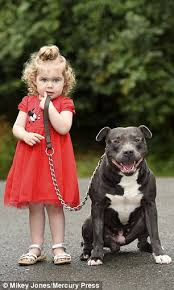 american pitbull terrier uk law little traumatized after police seize dog because it has u0027pit