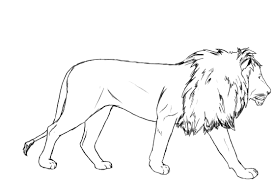 white lion clipart drawed pencil and in color white lion clipart