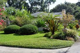 low maintenance lawn alternatives ground cover har com