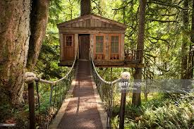 walkway to remote tree house stock photo getty images