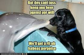 Dog Lawyer Meme - animal capshunz lawyer dog funny animal pictures with captions
