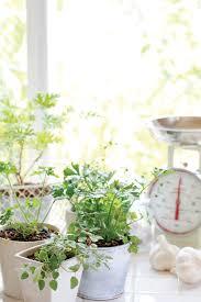 an indoor winter herb garden gardening mother earth living
