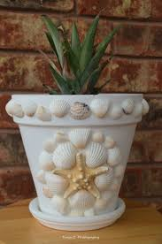my lovely sea shell flower pot with a pineapple plant tanja