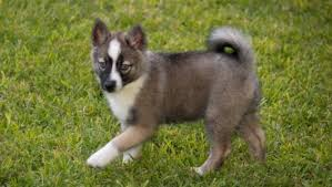 five secrets you will not want to know about husky mix with