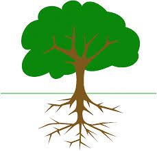 executive functioning is in the roots of the social learning tree