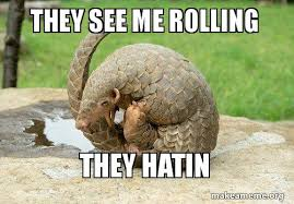 Armadillo Meme - they see me rolling they hatin rolling armadillo subscribe