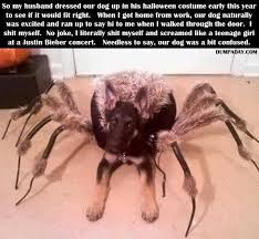 Afraid Of Spiders Meme - anyone here have a fear of spiders imgur