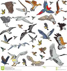 color birds set seamless pattern stock images image 37924784