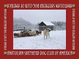 australian shepherd club of america anatolian shepherd club of america