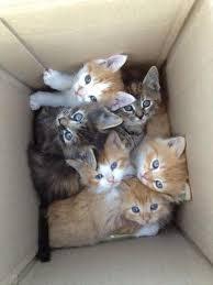Cute Kittens Meme - cute kitten pictures bdfjade