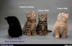Black Box Meme - black sabbath kitten meme generator captionator caption