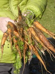 Freezing Root Vegetables - grow it eat it 1 1 13 2 1 13