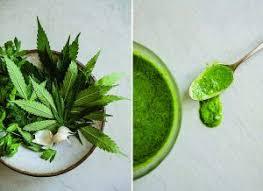 chambre de culture cannabis complete chambre de culture complete cannabis philosopher seeds with chambre