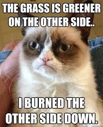 Funny Grumpy Cat Memes - 53 best grumpy cat meme images on pinterest funny stuff grumpy