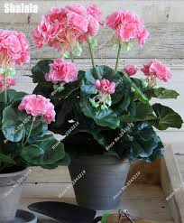 popularne decorative indoor planters kupuj tanie decorative