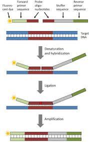 Multiplex Definition Multiplex Ligation Dependent Probe Amplification Mlpa Analysis