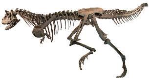 pixel halloween skeleton background file dinossauromcnpucminas white background jpg wikipedia