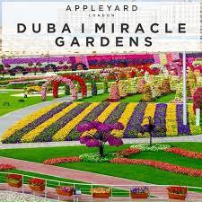 dubai miracle garden appleyard london blog