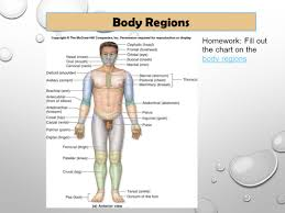 axial region anatomy gallery human anatomy learning