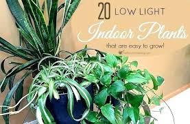 best light for plants best of very low light indoor plants for low light plants low light