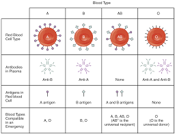 blood typing online textbook chapter alyvea com