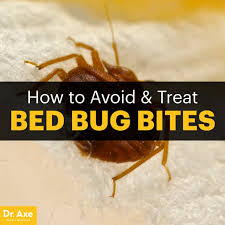 Bed Bug Bed Bug Bites Symptoms Facts U0026 Natural Treatments Dr Axe