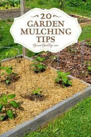 9 types of mulch and why you should use them it is what is and