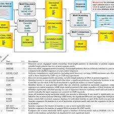 Meme Chip - meme chip analysis of vdr chip seq data a tomtom alignment of the