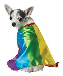 Extra Large Dog Halloween Costumes Rainbow Cape Dog Costume Today Pet Fancy