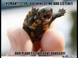 Turtle Memes - turtle memes youtube