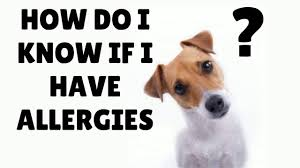 skin allergies in dogs youtube