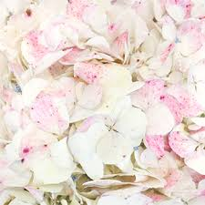 pink hydrangea vintage hydrangea flower