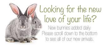 rabbit rabbit rabbits rabbit rescue
