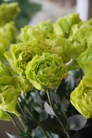 Lime Green Flowers - 210 best floral green flowers images on pinterest green flowers