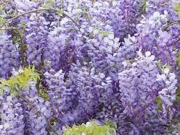 beautiful spring flowers blooming in georgia u201d by michele babcock