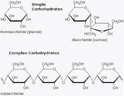 how does the structure of proteins differ from the structure of