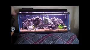 Aquarium For Home Decoration Cichlid Aquariums Youtube