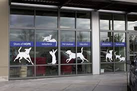 window graphics and lettering squared designs
