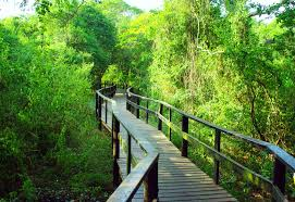 free images tree forest trail bridge river green jungle