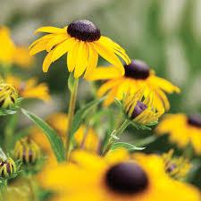 Summer Garden Quotes - 9 best summer flowers sunset