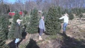 beezup christmas tree farm clarks summit pa youtube