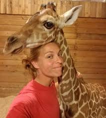 a new born giraffe at como park zoo u0026 conservatory update today