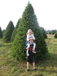 hunt for the perfect christmas tree at tree farms around olympia